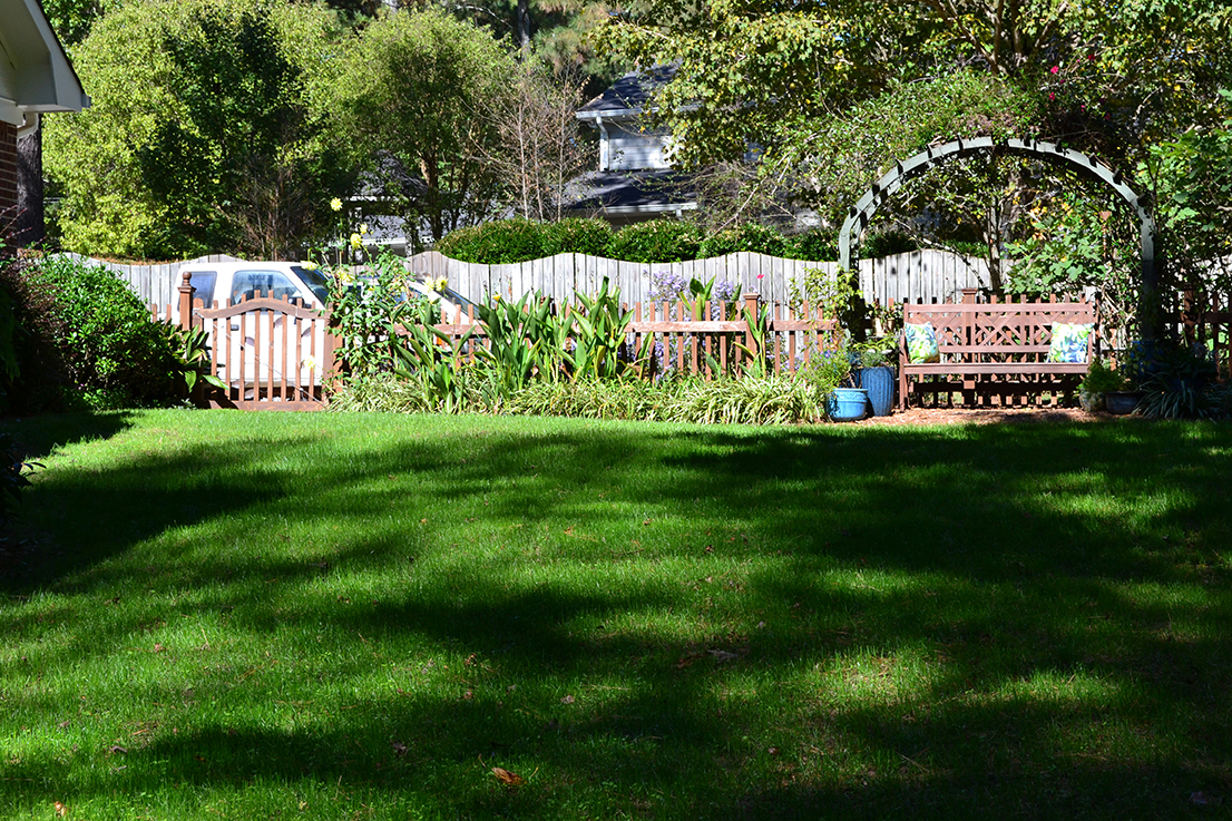 Kays Elite Tall Fescue seed lawn yard 4 weeks later