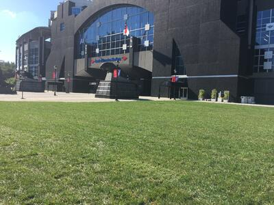 Elite Tall Fescue outside Bank of America Panthers Stadium in Charlotte_October 3 2017