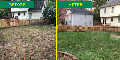 before and after elite tall fescue