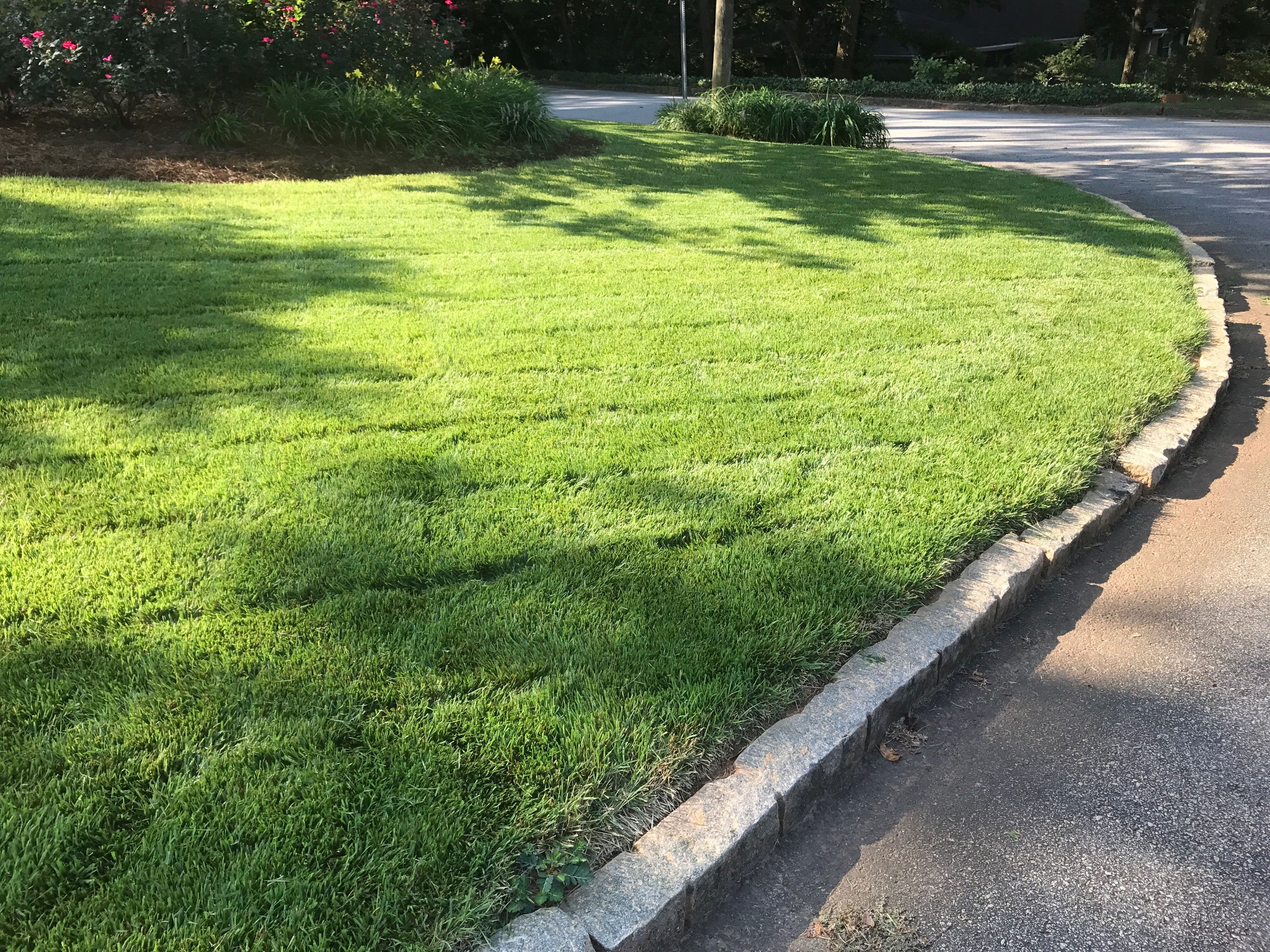 product-seed_zenith-lawn-curbside