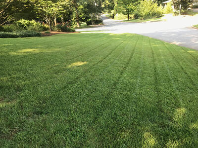 product-seed_zenith-lawn