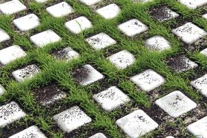 Drivable Grass: Parking & Driveway Pavers