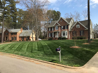 product_elite-tall-fescue-front-lawn