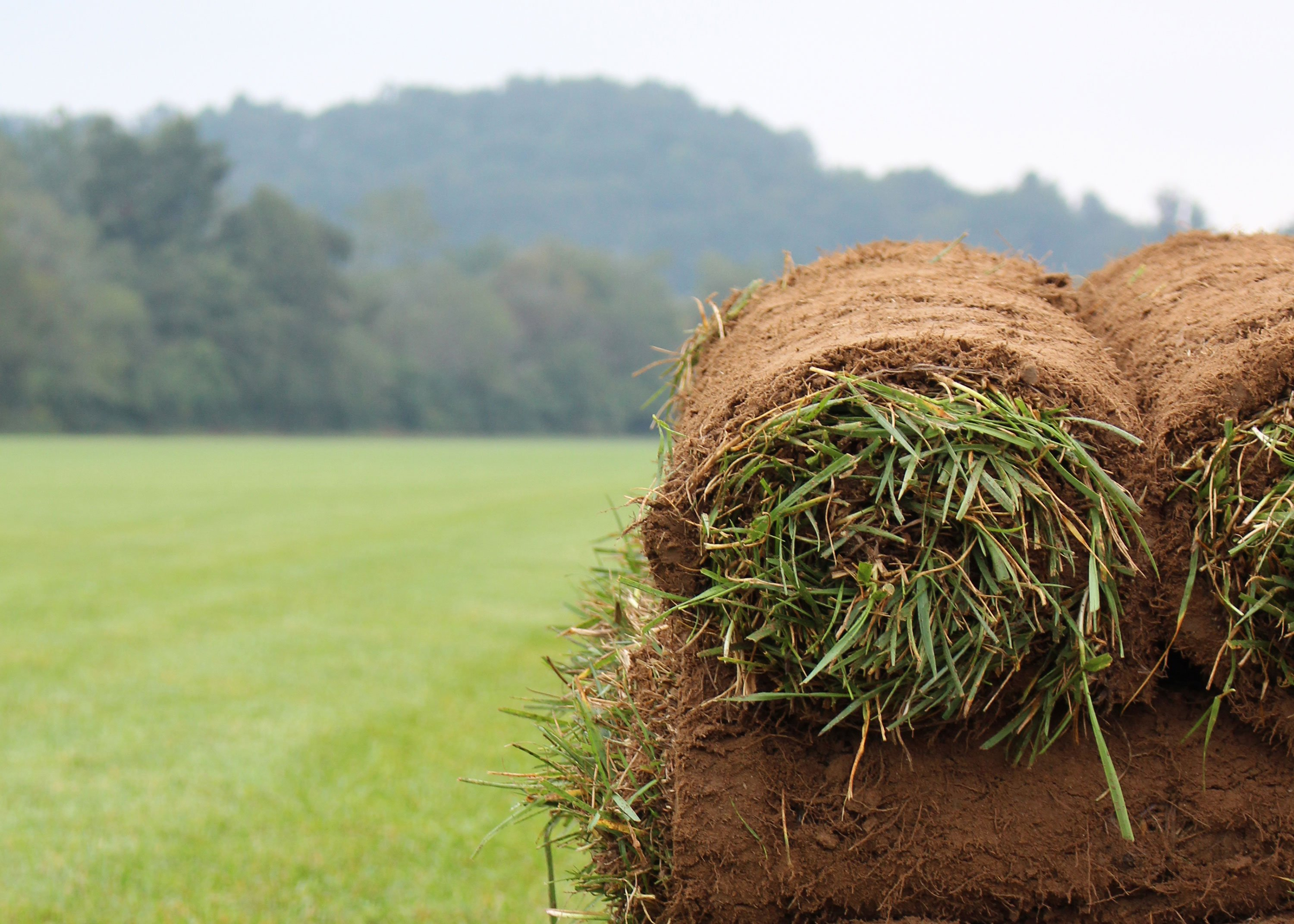 product_elite-tall-fescue-rolls-close-up