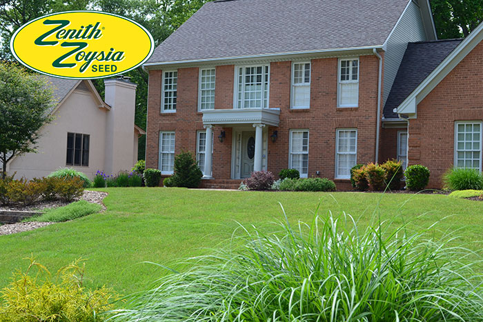 Zenith-Zoysia-lawn-from-seed1