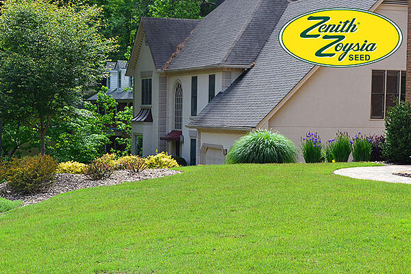 Zenith-Zoysia-lawn-from-seed2