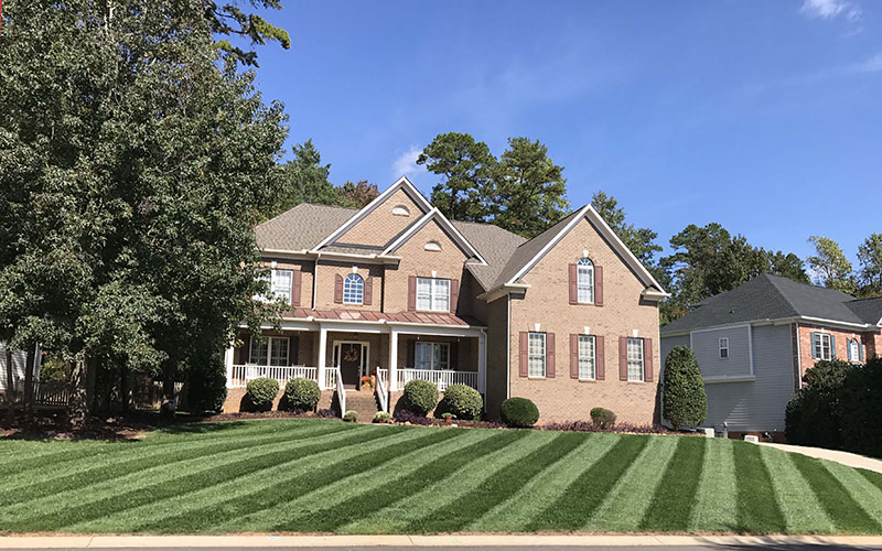 Elite Tall Fescue Lawn Maintenance