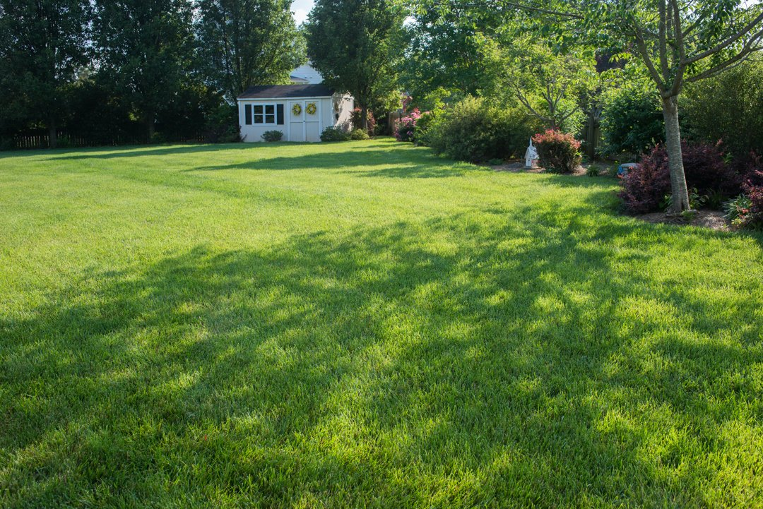 elite_tall_fescue_seeded_lawn