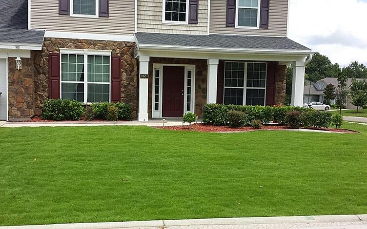 Emerald Zoysia Lawn Maintenance