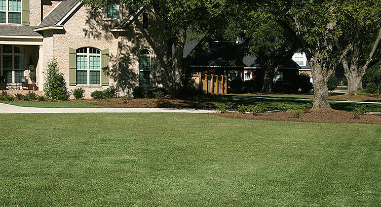 TifBlair Centipede Lawn Maintenance