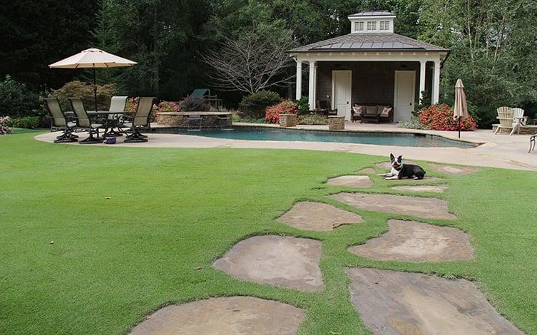 Zeon Zoysia Lawn Maintenance
