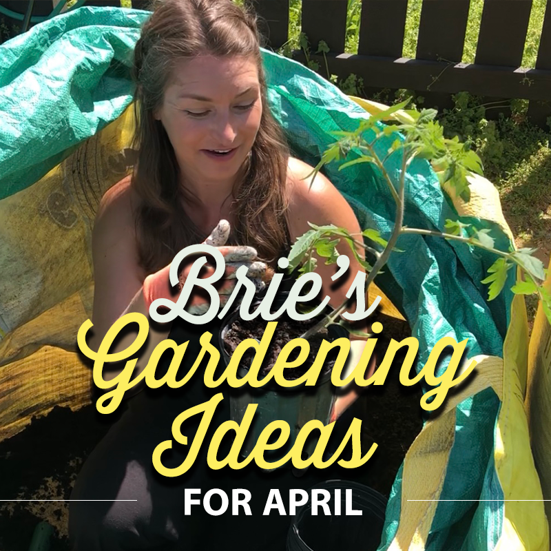 Brie's Gardening Ideas for April