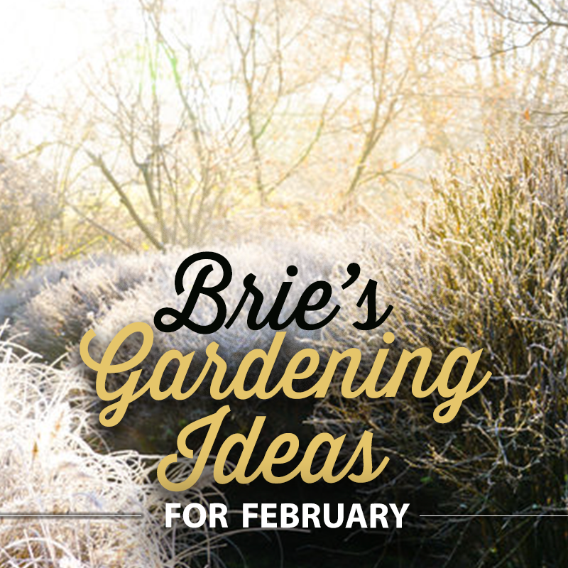 Brie's Gardening Ideas for February