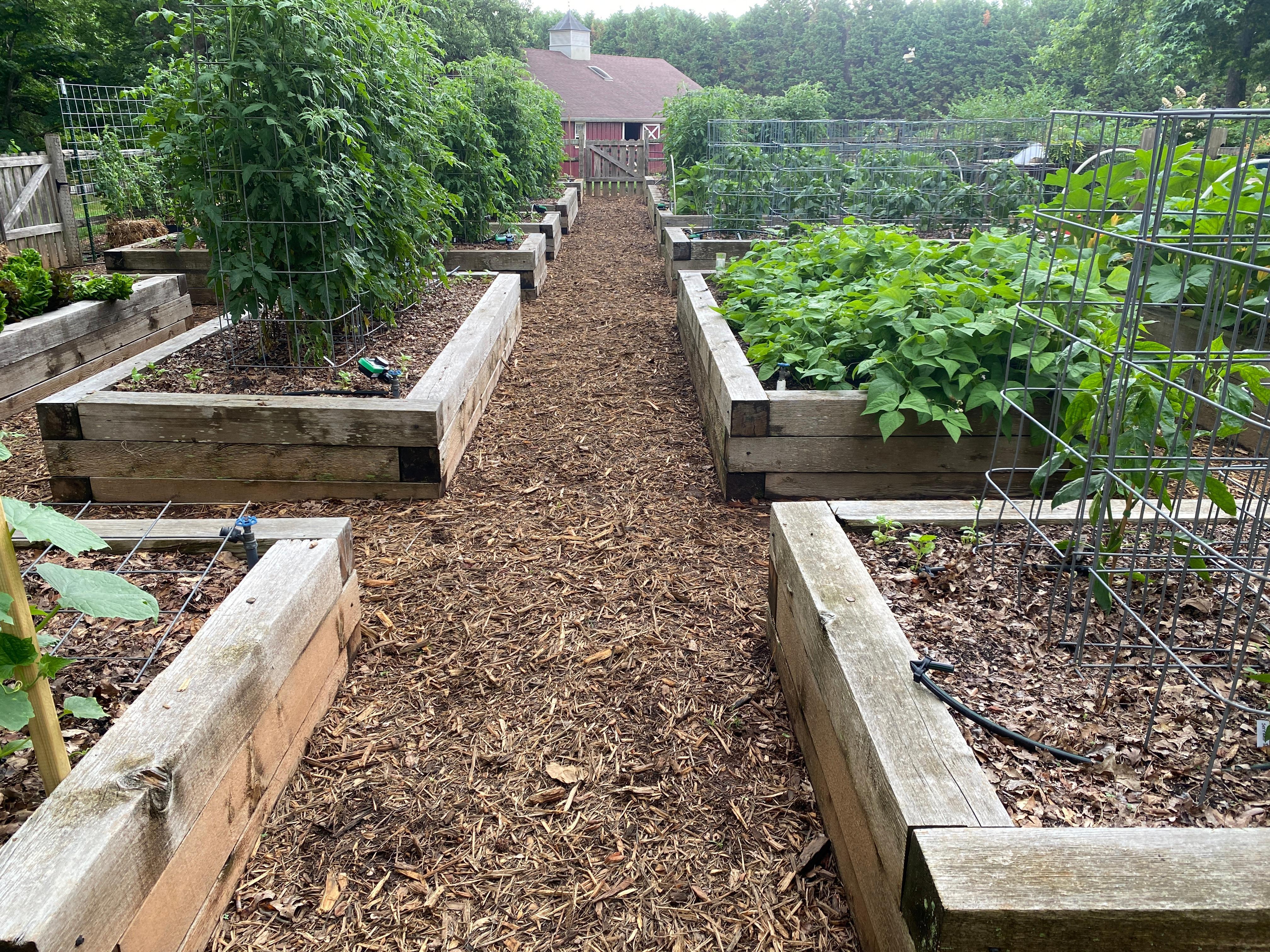 Crop Rotation in Joe Lampls garden farm1