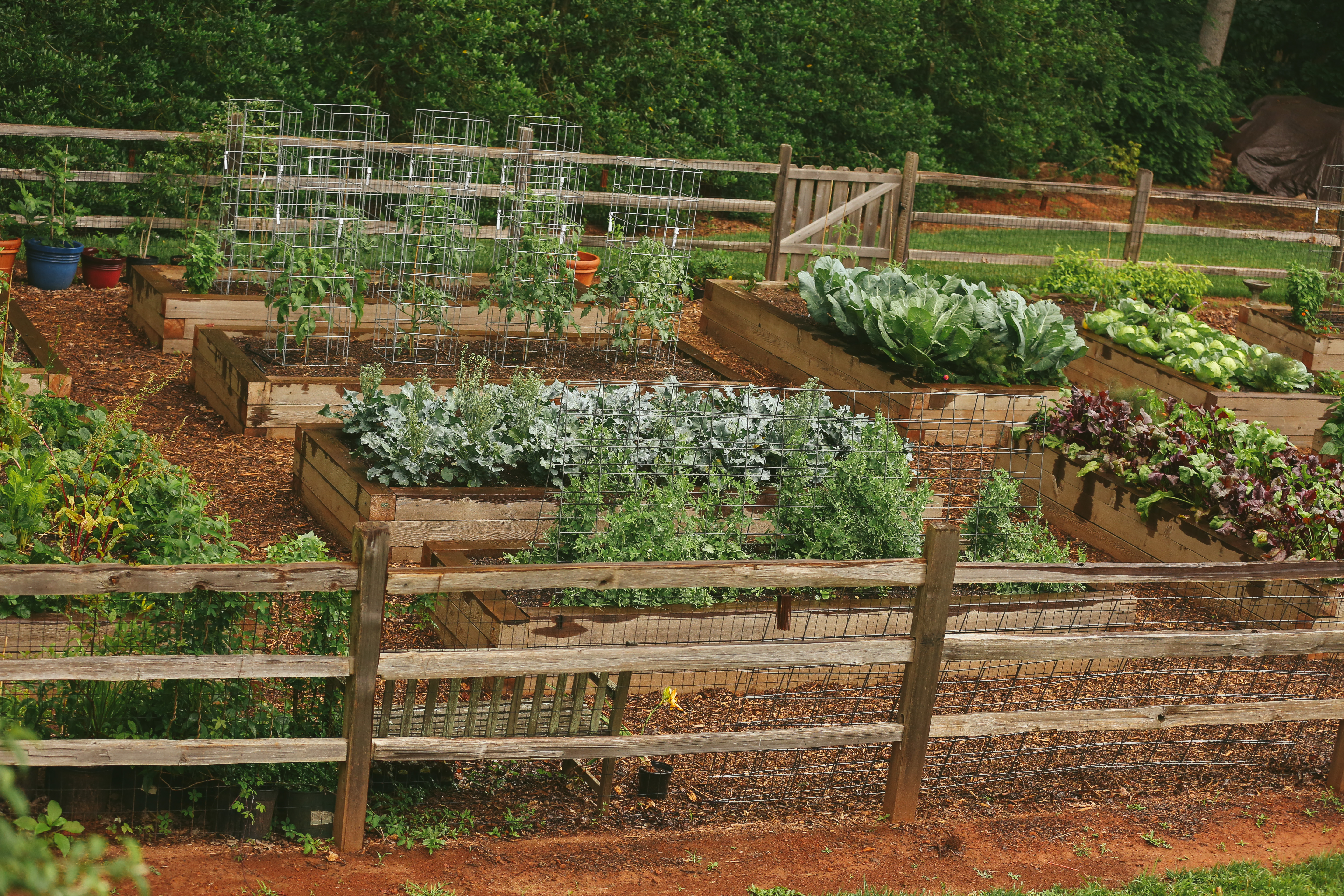 Rotating Crops for Healthier Plants and Better Soil